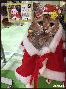 3coins 300均 2016 クリスマス