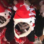 USJクリスマス2017仮装カチューシャ 帽子 被り物【画像・値段】
